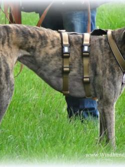 Kleinster Greyhound